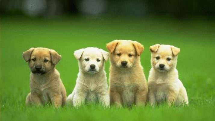 Los Angeles County Raises Dog Limit From 3 to 4 Per Household