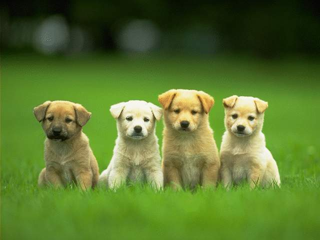 los angeles dog